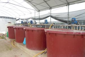 Veduta di insieme di un impianto di fertirrigazione con le tre vasche per le soluzioni nutritive concentrate e a destra la batteria di elettrovalvole